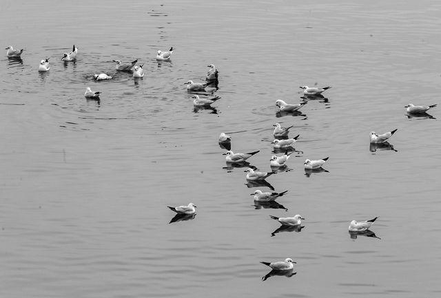 امسال یک میلیون پرنده تنها در فریدون کنار شکار شد