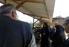 بازدید مدیرکل امور زنان و خانواده استانداری از طرح گاوداری صنعتی یکی از بانوان کارآفرین استان در ارومیه