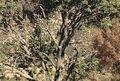 غنی سازی جنگلهای بویراحمد با بذر بلوط و بادام