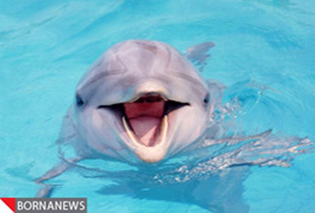 دلفینها مشابه انسانها حرف میزنند