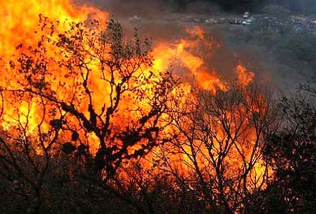 شکارچیان غیرمجاز عامل آتشسوزی پارک ملی گلستان