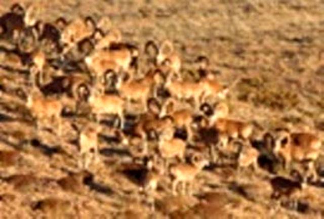 افزایش جمعیت حیات وحش بوشهر