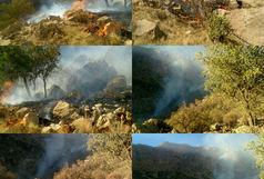 مهار شدن آتش سوزی جنگلهای کوه خامی پس از یک شبانه روز