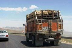 واگذاری صدور پروانه بهداشتی حمل دام زنده در قزوین به شهرستانها