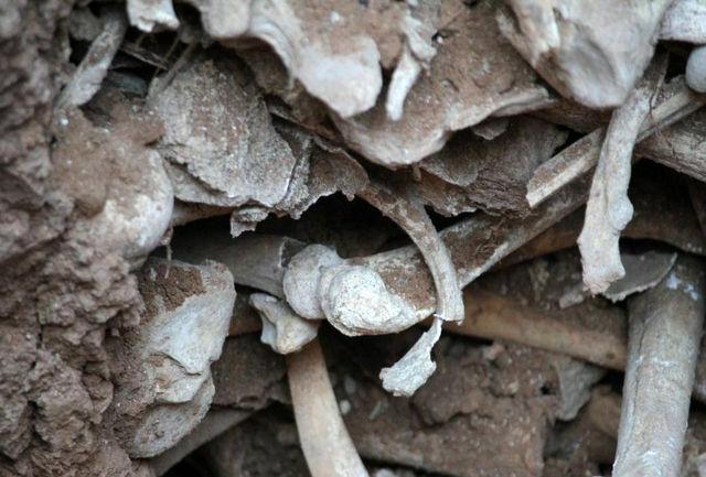 استخوان های یافت شده جنبه باستانی و تاریخی ندارند