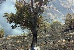 نابودی 21 اصله درخت در آتش سوزی دو باغ شیراز