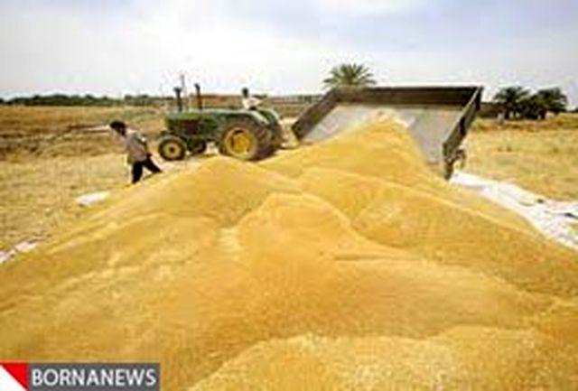 برداشت گندم در استان یزد آغاز شد