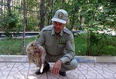 دستگیری فروشنده توله گرگ