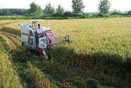 پیشبینی کشت بیش از دو هزار هکتار برنج در چهارمحال و بختیاری