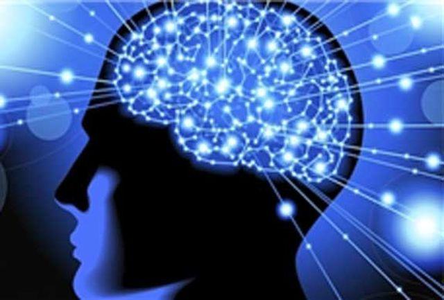 راز ذخیره سازی لغات در مغز
