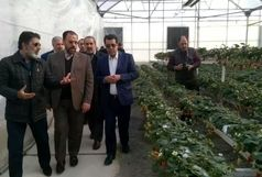 بازدید معاون پارلمانی رئیس جمهور از شرکت تراکتورسازی و گلخانه هیدروپونیک توت فرنگی ارومیه