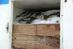 کشف یک تن ماهی قاچاق در ایرانشهر
