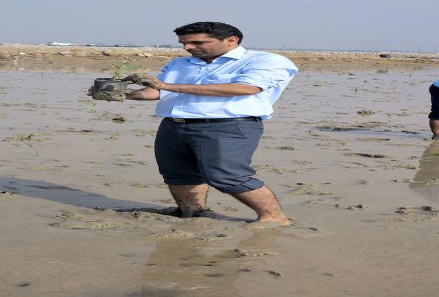 کاشت 4 هزار نهال حرا در ساحل بندرعباس