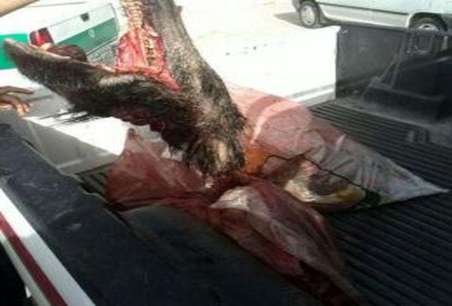 حکایت کشتار گراز ها در لرستان / بفرمایید گوشت گراز