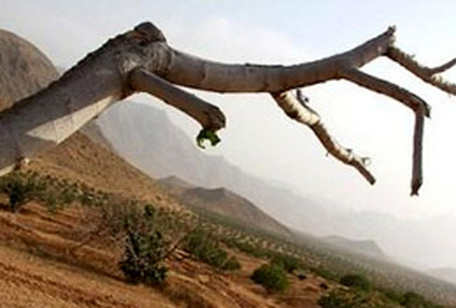 خشكسالی 120 میلیارد تومان به خراسانشمالی خسارت زد