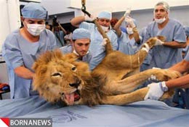 گزارش تصویری: سلطان جنگل به دندانپزشکی رفت