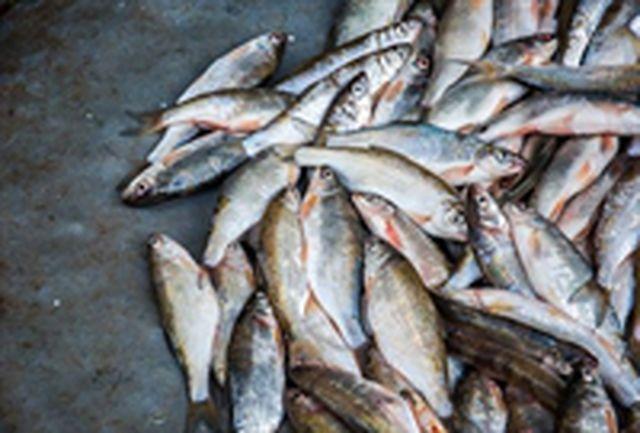 کشف و ضبط 300 کیلوگرم ماهی غیر بهداشتی در بیرجند