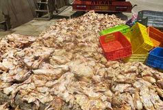 11تن گوشت مرغ فاسد در شهرستان زرندیه معدوم شد