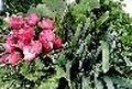 امحاء 17 هکتار از سبزیهای آبیاری شده با فاضلاب در همدان