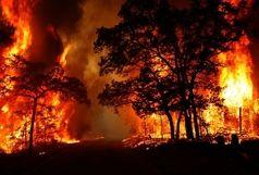 611 هکتار جنگل استان در آتش سوخت