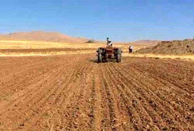 47 هزار هکتار از اراضی کشاورزی دهلران به کشت گندم اختصاص یافت