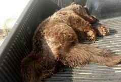کشف لاشه یک قلاده خرس قهوه ای در صومعه سرا