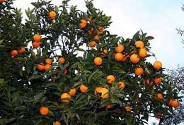 سرما 203میلیارد تومان به محصولات کشاورزی در گلستان خسارت زد