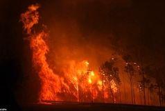تصاویر وحشتناک از آتش سوزی پرتغال/ 36نفر تاکنون جان باختهاند