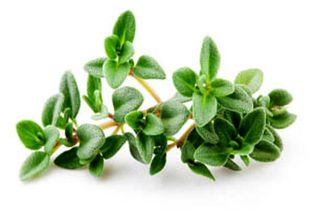 این گیاه در درمان سرفه معجزه می کند
