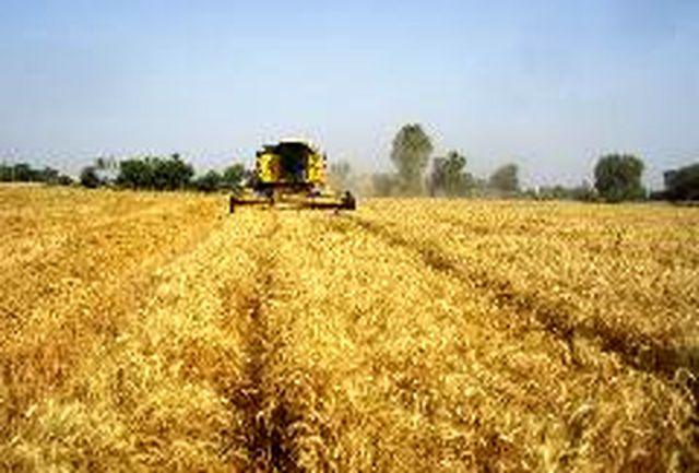 برداشت بیش 48هزارتن گندم در هرمزگان