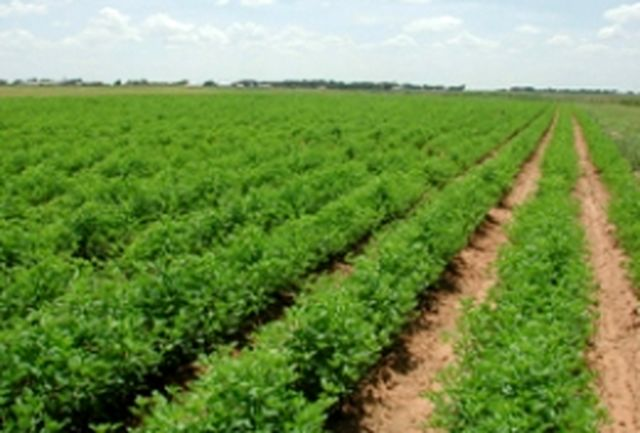 خرد بودن اراضی مهمترین مشکل پیش روی کشاورزی صنعتی همدان