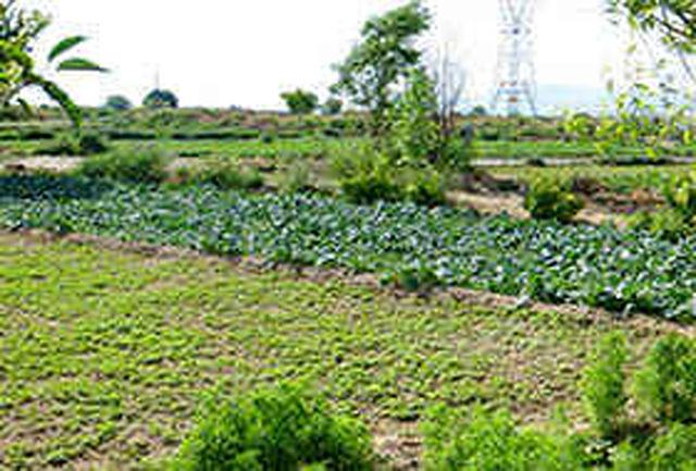 بخش کشاورزی برای توسعه استان مهم است