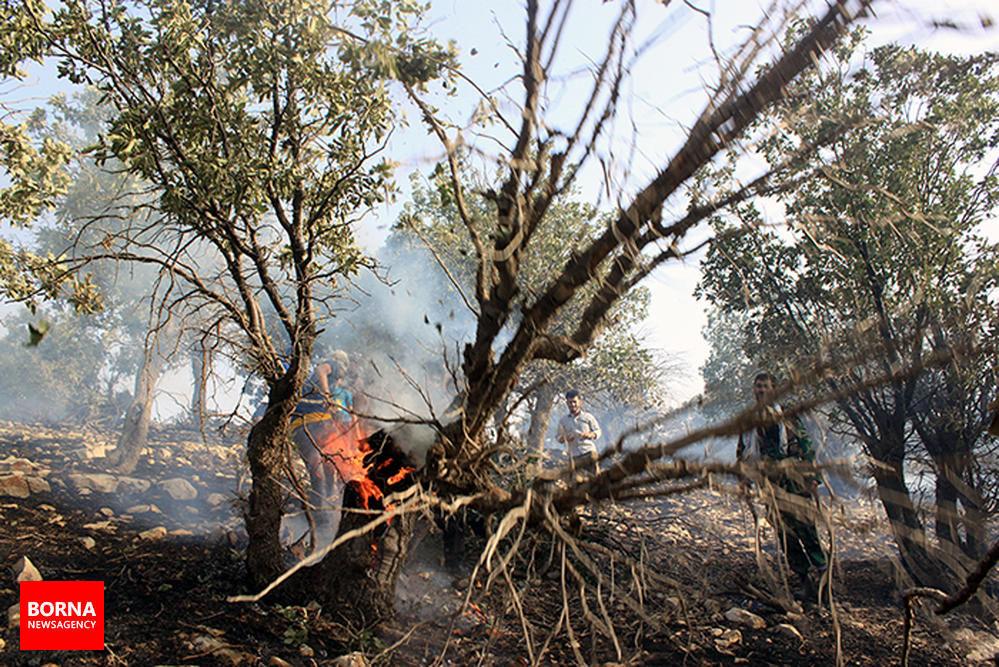 آتش+سوزی+در+جنگل+های+شلم+در+استان+ایلام