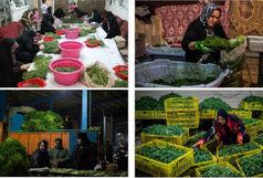 کارگاه های غیر مجاز فرآوری سبزی بلای جان مردم اصفهان