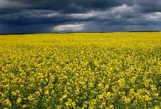 شرکت های سهامی زراعی در مناطق محروم توسعه می یابند