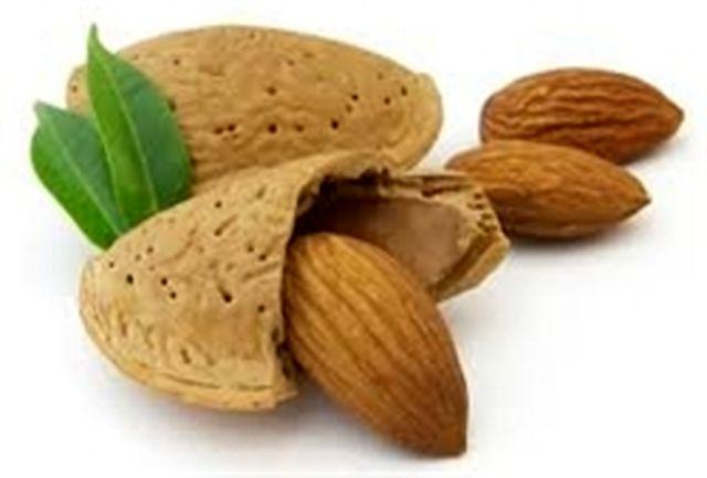 صادر شدن بیش از 90 درصد بادام تولید شده در باغات چهارمحال و بختیاری