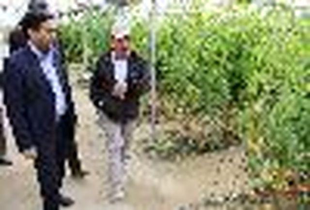 بازدید ریاست سازمان جهاد کشاورزی هرمزگان از مجتمع دامداران و گلخانه سرچاهان حاجی آباد