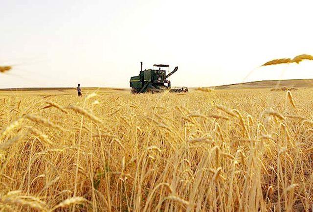 خرید 55 هزار تن گندم از کشاورزان استان سمنان