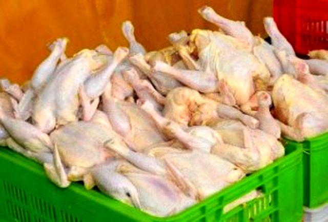 دولت 12 هزار تن تولید مازاد بر مصرف مرغداران را خرید