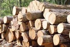 کشف چوب بلوطهای قاچاق  در خرم آباد
