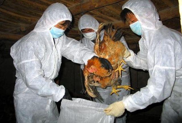 16 میلیارد ریال خسارت آنفلوآنزای پرندگان در جیرفت پرداخت می شود