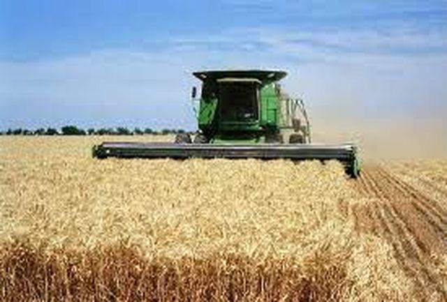 پیشبینی تولید ۷۰۰ هزار تن گندم در استان