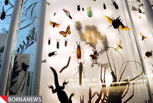 8.5 میلیون گونه جانوری و گیاهی در زمین زندگی می کنند