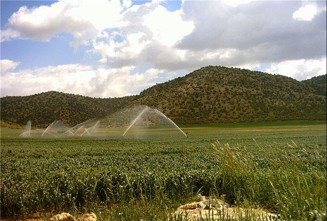 تحقق 46درصد برنامه دولت در اجرای طرح نوین آبیاری