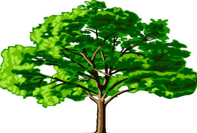 درخت 6 هزار ساله عجیب را ببینید