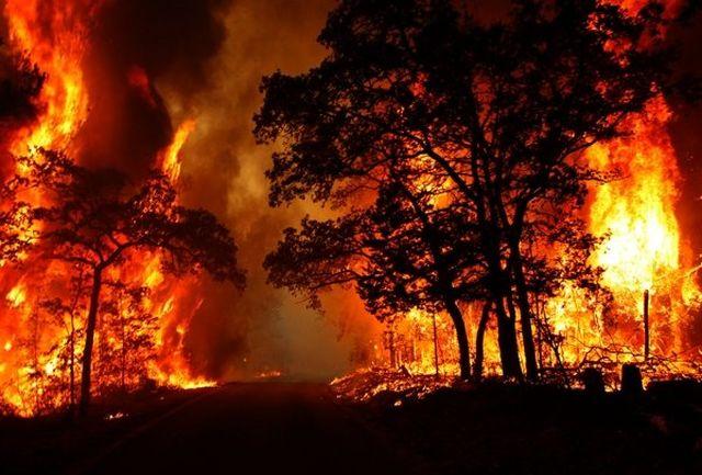 آتش سوزی در سطح جنگل های استان ایلام کاهش یافته است