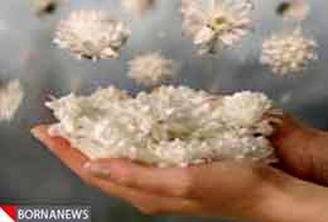 مرگ جوان 29 ساله شیرازی رنج  3 بیمار دیگر را التیام داد